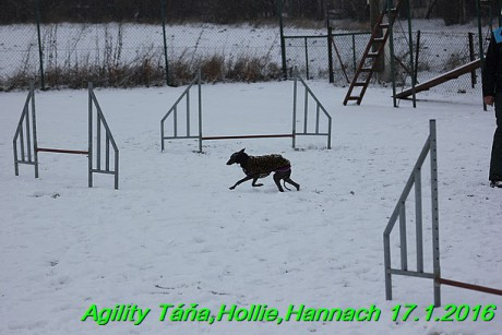 Agility Tana, Hollie,Hannach 17.1.2016 (143)