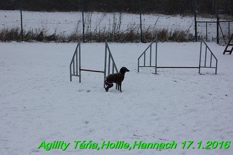Agility Tana, Hollie,Hannach 17.1.2016 (144)