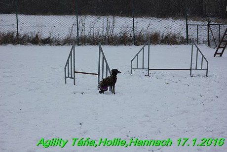 Agility Tana, Hollie,Hannach 17.1.2016 (146)