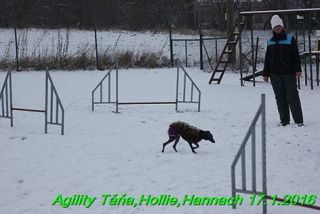 Agility Tana, Hollie,Hannach 17.1.2016 (147)