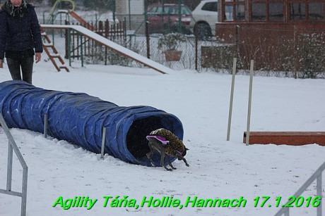 Agility Tana, Hollie,Hannach 17.1.2016 (148)