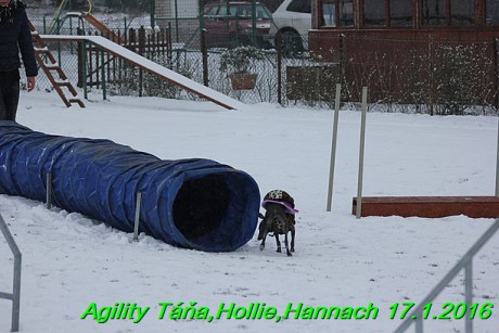Agility Tana, Hollie,Hannach 17.1.2016 (149)