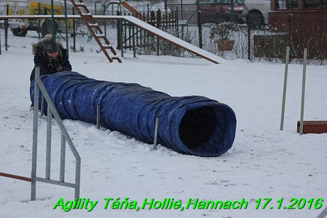 Agility Tana, Hollie,Hannach 17.1.2016 (151)
