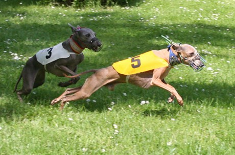 Ceysse Bugsy and Divinity Bugsy, race training 02.jpg