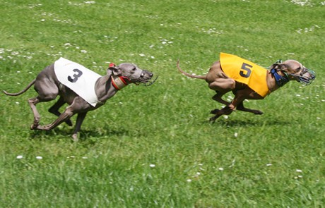Ceysse Bugsy and Divinity Bugsy, race training 03.jpg