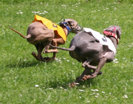 Ceysse Bugsy and Divinity Bugsy, race training 05.jpg