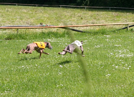 Ceysse Bugsy and Divinity Bugsy, race training 07.jpg