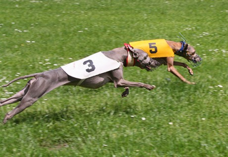 Ceysse Bugsy and Divinity Bugsy, race training 04.jpg