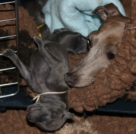 litter-s-2012--4-days-old--2--kopie.jpg