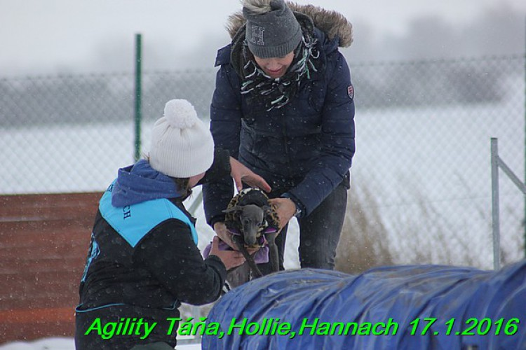 agility-tana--hollie-hannach-17.1.2016--81-.jpg